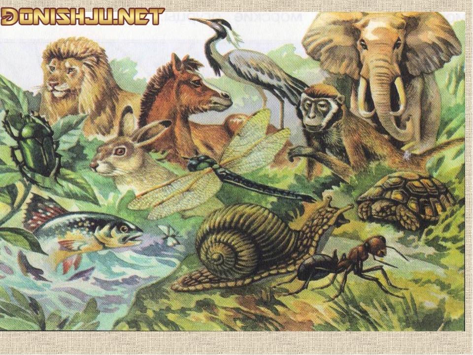 Таърихи фанни зоология