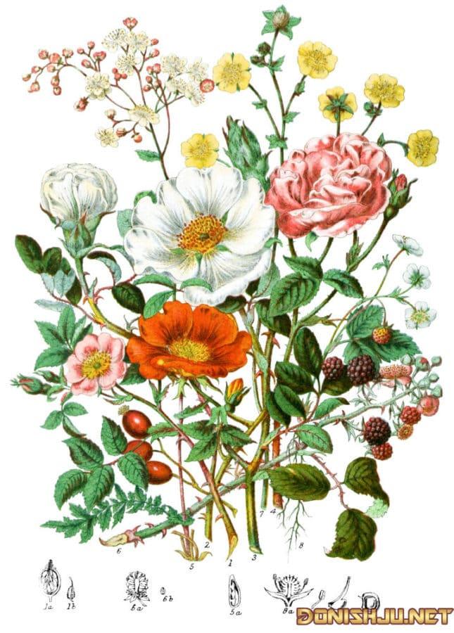 Илми ботаника (Ботаника чист?)